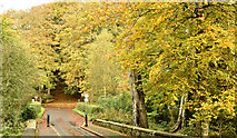 J3268 : Autumn, Minnowburn, Belfast -October 2017(1) by Albert Bridge