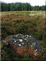 NY9554 : 'Curlew stone', finger stone circle, Ladycross Bank Quarry : Week 43
