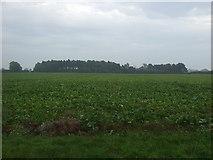 TF8130 : Crop field towards woodland by JThomas