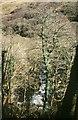 SX6971 : Dart at Bellpool Island, 2000 by Derek Harper