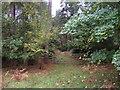 TF6826 : Entrance to Lynnroad Plantation by JThomas