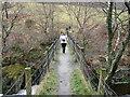 SN7278 : The path to Devil's Bridge by John Lucas