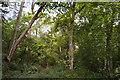 SP9848 : Astey Wood by N Chadwick