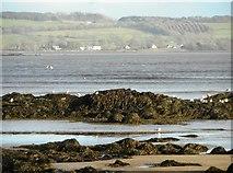 NX6548 : Gulls on the rocks by Richard Sutcliffe