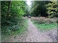 SU9411 : Dog walkers in Eartham Wood by Peter Holmes