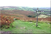 SJ1663 : The Clwydian Way north of Moel Famau by Jeff Buck