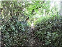 ST5707 : Bridleway to Melbury Osmond by Jonathan Thacker