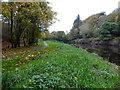H4772 : Grassy riverbank, Campsie by Kenneth  Allen