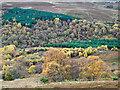 NJ0029 : Deciduous trees on slope descending to Glen Beg : Week 43