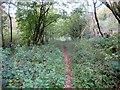 SU9312 : Selhurst Park Wood by Peter Holmes