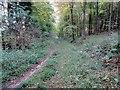SU9312 : Footpath in Droke Hanger by Peter Holmes