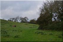 SY1988 : East Devon : Grassy Field by Lewis Clarke