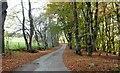 NJ6404 : Minor road through 'Netherlands' shelter belt by Stanley Howe
