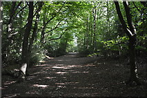 SU8595 : Footpath, Downley Common by N Chadwick