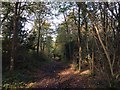 ST5574 : Path in Leigh Woods by don cload