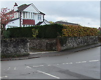 ST3090 : Contrasting hedges in autumn, Pillmawr Road, Malpas, Newport by Jaggery