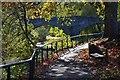 NT6520 : Riverside path, Jedburgh : Week 45