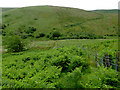 SN7553 : Hill pasture by Cwm Doethie Fawr, Ceredigion by Roger  Kidd