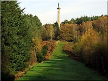 NZ1759 : Column to Liberty, Gibside by Andrew Curtis