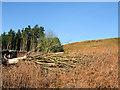 NZ5302 : Fallen tree on slope of dead bracken by Trevor Littlewood