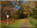 NS4276 : Woodland path, Overtoun Estate by Lairich Rig