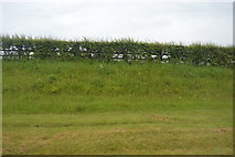 SX5251 : Grass verge, Wembury Rd by N Chadwick