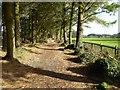 SW6543 : Pine Walk, Tehidy Park by Philip Halling
