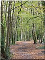 SW6443 : Trees in Tehidy Country Park by Philip Halling