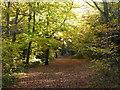 TQ4470 : Chislehurst Common in autumn by Marathon