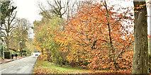 J3875 : Autumn leaves, Belfast (November 2017) by Albert Bridge