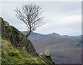 NY4212 : Tree growing from crag : Week 46