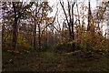 TQ1661 : Woodland at Great Oaks, Oxshott by Mike Pennington