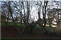 ST7475 : Old horse chestnut tree, Dyrham Deer Park by M J Roscoe