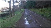 NT1126 : Forest road, Hearthstane by Richard Webb