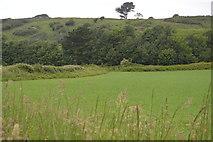 SX5048 : Field, Wembury Point by N Chadwick