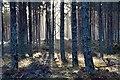NH9121 : Sunlit woods near Carrbridge by Jim Barton