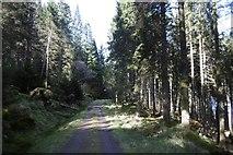 NS1393 : Road, West side of Loch Eck by Richard Webb