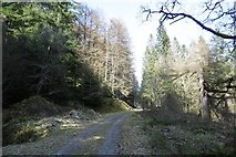 NS1393 : Road on the west side of Loch Eck by Richard Webb