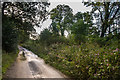 SX2788 : Lane alongside the River Ottery by Ian Capper