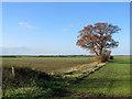 TL5281 : Towards West Fen Farm by John Sutton