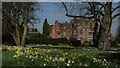 SJ7773 : Peover Hall, E Cheshire (Daffodils) by Colin Park