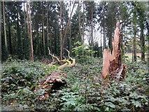 SU9211 : Fallen tree in Selhurst Park by Peter Holmes