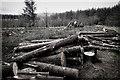 SD7357 : Recent felling, Gisburn Forest by Mick Garratt