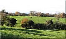 SE3766 : Ridge and furrow at Roecliffe by Gordon Hatton