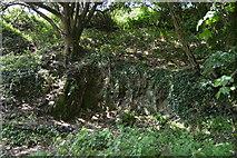 SX4448 : Small rock outcrop by N Chadwick