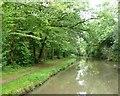 SP4478 : North Oxford canal alongside All Oaks Wood by Christine Johnstone