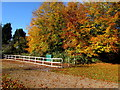 SO3808 : Autumn colours at the edge of Raglan Garden Centre by Jaggery