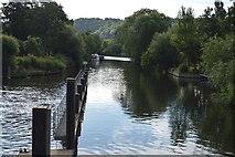 SU8586 : River Thames by N Chadwick