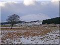 NN3244 : Black Mount from the Bog by Adam Ward
