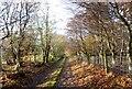NJ8029 : Lane from Hillhead of Lightnot by Stanley Howe